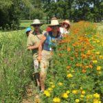 Asheville Farm to Table Tours