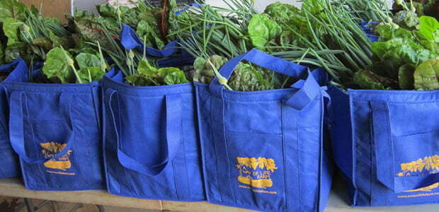 Packed CSA bags
