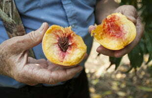 peach from JW Mitchell Farms