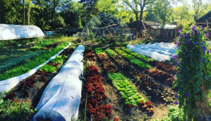 Roots & Fruits Market featuring Olivette Farm and The Rhu
