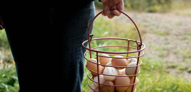 Carrying a basket of farm eggs