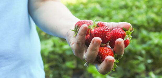 local strawberries from Davis Family Farm