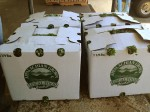 wax boxes with kale